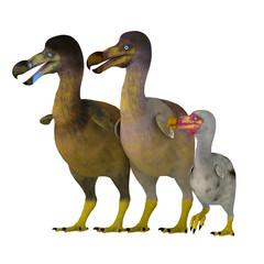 Dodo Bird Family - The Dodo is an extinct flightless bird that lived on Mauritius Island in the Indian Ocean near Madagascar.