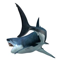Great White Shark Tail
