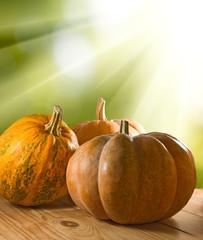 image of pumpkin closeup