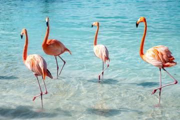 Wild Pink Flamingos on a Caribbean Beach