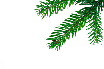 New year white copyspace background, green fir tree branches frame