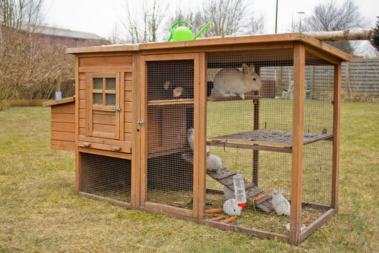 Süße Kaninchen Familie im Garten