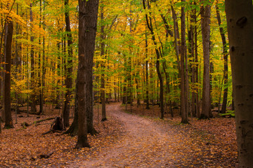 Fall Colored Path