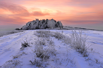 Beautiful winter landscape at sunrise in the forest. Winter forest
