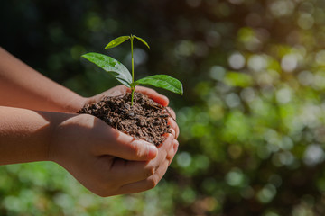 environment Earth Day In the hands of trees growing seedlings. Bokeh green Background kid hand holding tree on nature field grass Forest conservation concept