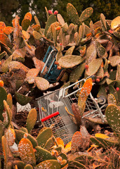Shopping Carts In Cactus
