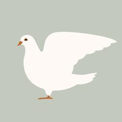 dove   bird  vector illustration flat style  profile