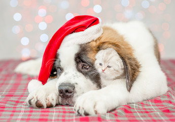 Kitten under ear of Saint Bernard puppy in Christmas hat