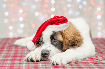 Sad saint Bernard puppy in a Christmas hat