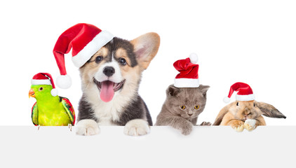 Group of pets in red christmas hats above empty white board. isolated on white background. Space for text