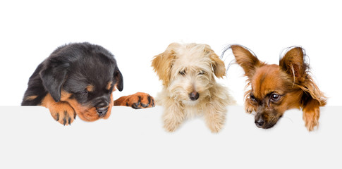Group of dogs  above white banner looking down. isolated on white background