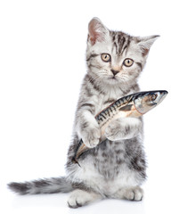 Kitten holding a fish in its paw and looking at camera. isolated on white background