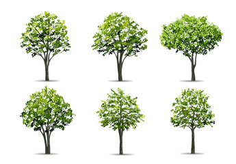 Collection of realistic tree isolated on white background. Natural object for landscape design, park and outdoor graphic. Vector.