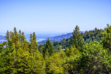 Canopy view of the forests of Mt Tamalpais State Park; San Francisco bay shoreline and San Francisco's skyline visible in the background; Marin County, California
