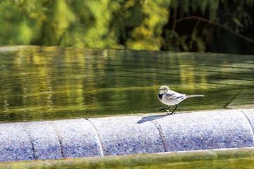 水辺で散歩する鳥