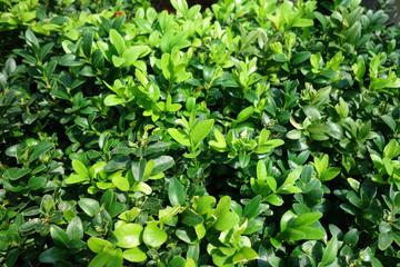 ガーデニング 植物 グリーン