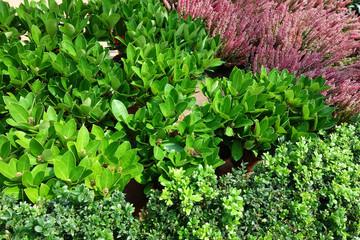 植物 緑 ピンクの花