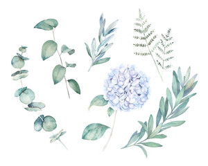 Watercolor greenery set. Botanical  winter illustration with eucalyptus branch and blue hydrangea. Vintage hand drawn plant