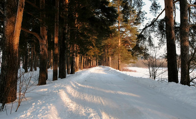Snow-covered road in the winter forest. Sunlight through the trees.