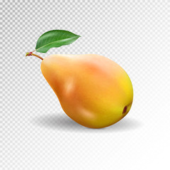 Pear realistic. Vector 10EPS. pear, punching bag, punching ball, punchbag, punchball. 3d illustrattion