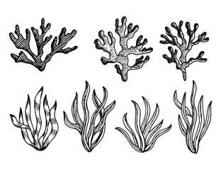 algae edible sketches vector. marine underwater plants weeds isolated
