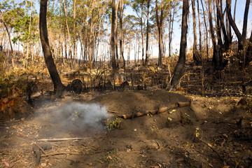 charbonnière déforestation Madagascar