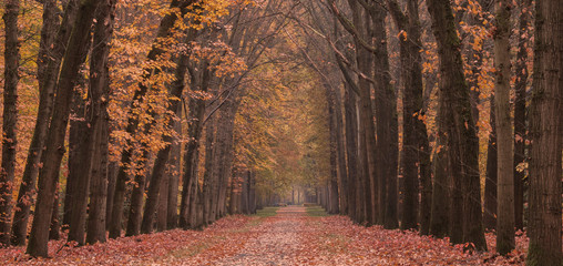 Forest lane in the autumn at the 'Lochemse berg' in the Netherlands