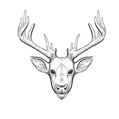 Vector vintage deer head in engraving, scratchboard style. Hand drawn illustration with animal portrait isolated