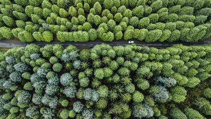 "Drone aerial view from above of road through the green autumn forest in ""Poiso"", Madeira island, Portugal."