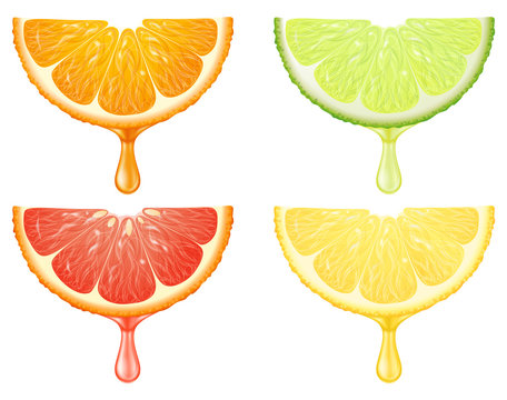 A set of citrus slices with juice drop. Vector illustration.