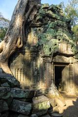 Kambodscha - Angkor - Ta Prohm