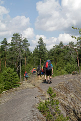 Hikers walking through a forest in Sweden