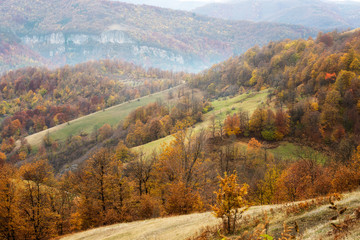Amazing autumn view of a mountain meadow with colorful forest
