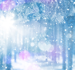 Winter bright background for cards. Christmas tree branches in hoarfrost.against the backdrop of snow-covered forest.