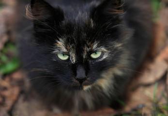 portrait of street wild cat