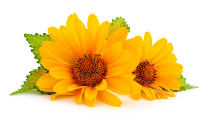 Two yellow flowers.
