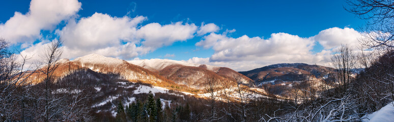 winter panorama of Uzhanian National Nature Park. forested mountains with snowy tops on a sunny day with fluffy clouds. wonderful nature of Carpathians