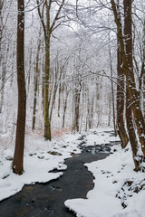 forest creek in winter forest. trees with weathered foliage along the snow covered shore. beautiful nature scenery