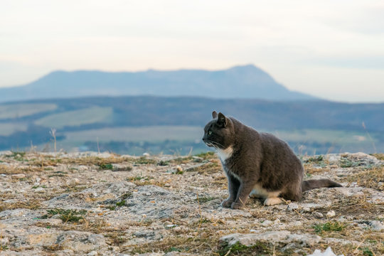 Cat in the mountains. Cat on top of the mountain