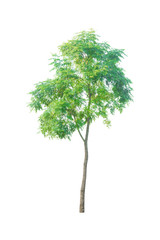 isolated tree on a white background with clipping path