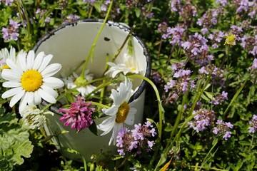 The sunny summer day the wild medicinal flowers lie in an old metallic white cup