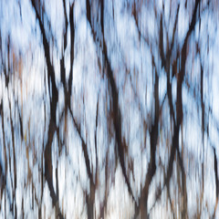 Nature abstract background with forest in autumn, Dobrogea land, Romania. Motion blur creative photo.