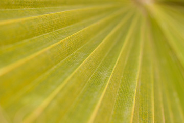 Abstracted close up of a palm leaf with shallow depth of field.