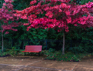 Red bench under fall colors.