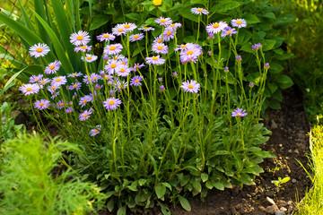 flower garden with a variety of perennials