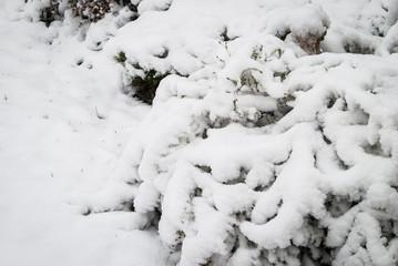 Snow covered bush
