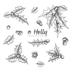 Set of hand drawn sketch Christmas holly branches. Vintage style. Traditional christmas decoration. For design holiday card, invitation, poster, banner.
