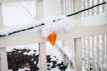 Snow covered orange Christmas light