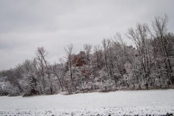 Winter Tree Line in Snowy Field