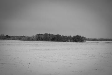 Distant Tree Line in Snowy Field